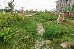 Actual-Site-Pictures-Tarang04